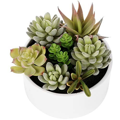 fausses succulentes