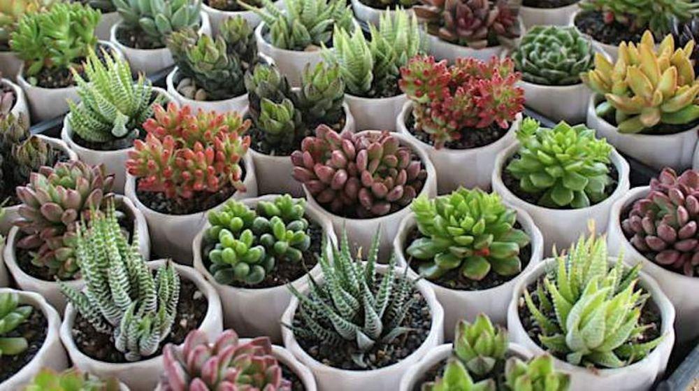 Du grand au petit cactus artificiel pour votre déco
